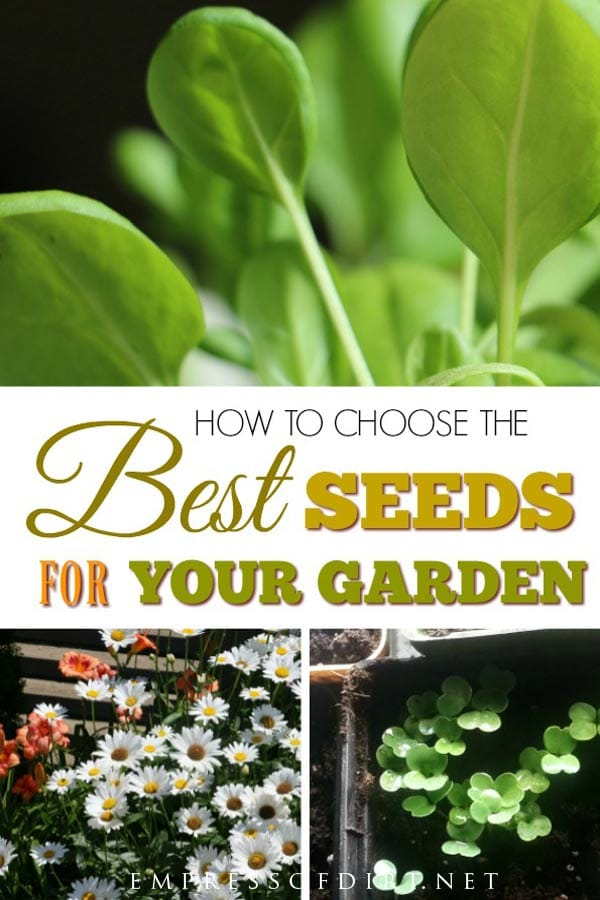 How to choose the best seeds for seed starting success.