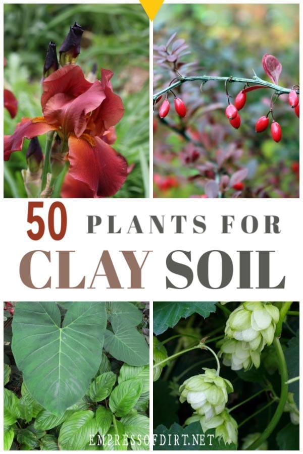 50 Plants for Clay Soil (Flowers, Shrubs, and Trees)