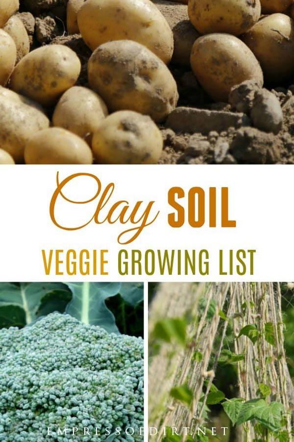 10 Best Vegetables for Clay Soils