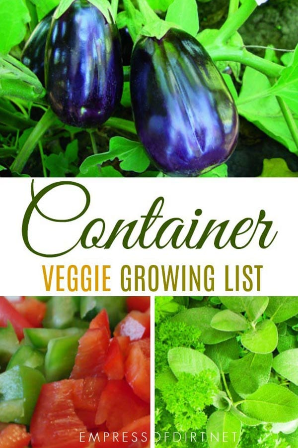 10 Best Vegetables for Containers