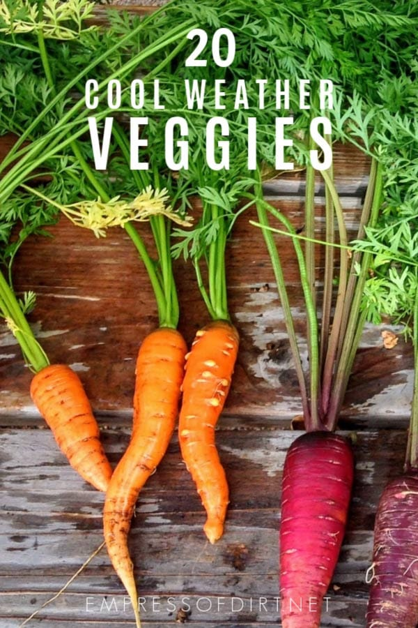 20 Quick-Growing Veggies | Spring & Fall | Free Printable