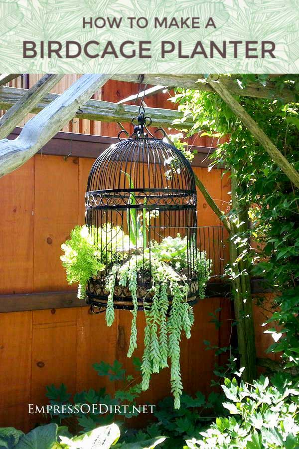Old metal birdcage hanging in garden with succulents planted inside.