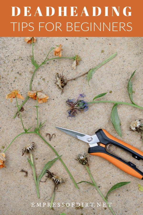 Pruning snips and flowers that have been deadheaded.
