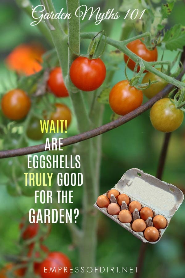 Some say eggshells give their garden plants a big boost. But is this another garden myth? Find out here.