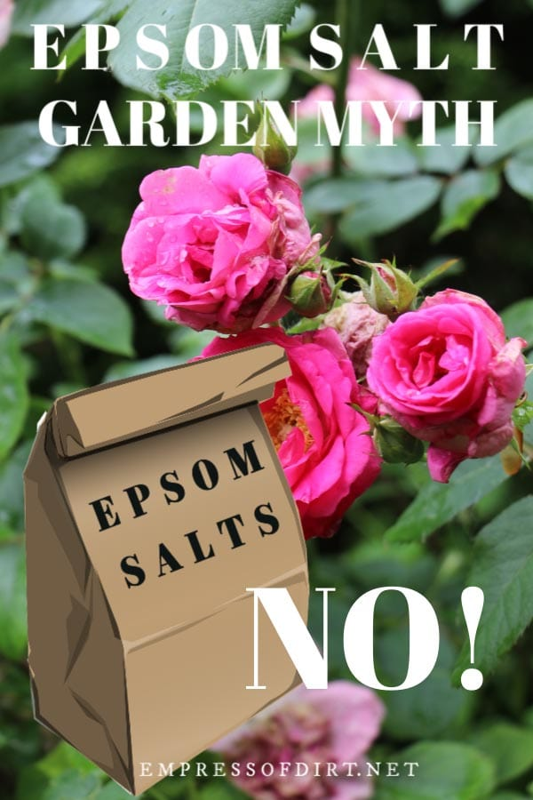 Are Epsom Salts Good For Plants Or A Garden Myth Empress Of Dirt