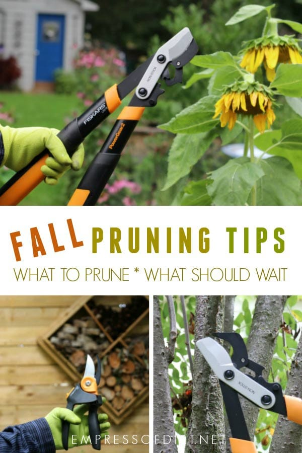 Fall pruning tips for the home garden and how to choose the right tools for the job.