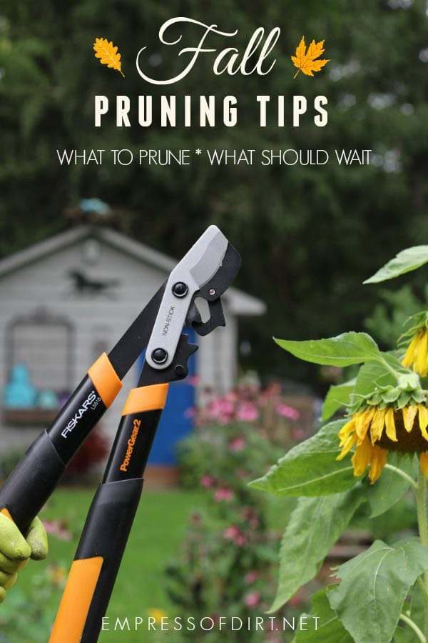Fall pruning tips for the home garden: what to prune and what should wait.