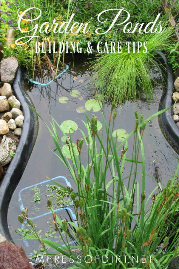 Garden ponds bring life to the garden. See how to build your own and care for aquatic fish and plants.