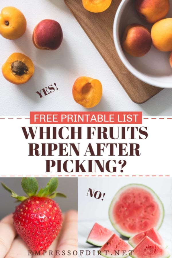 Which fruits ripen after picking?