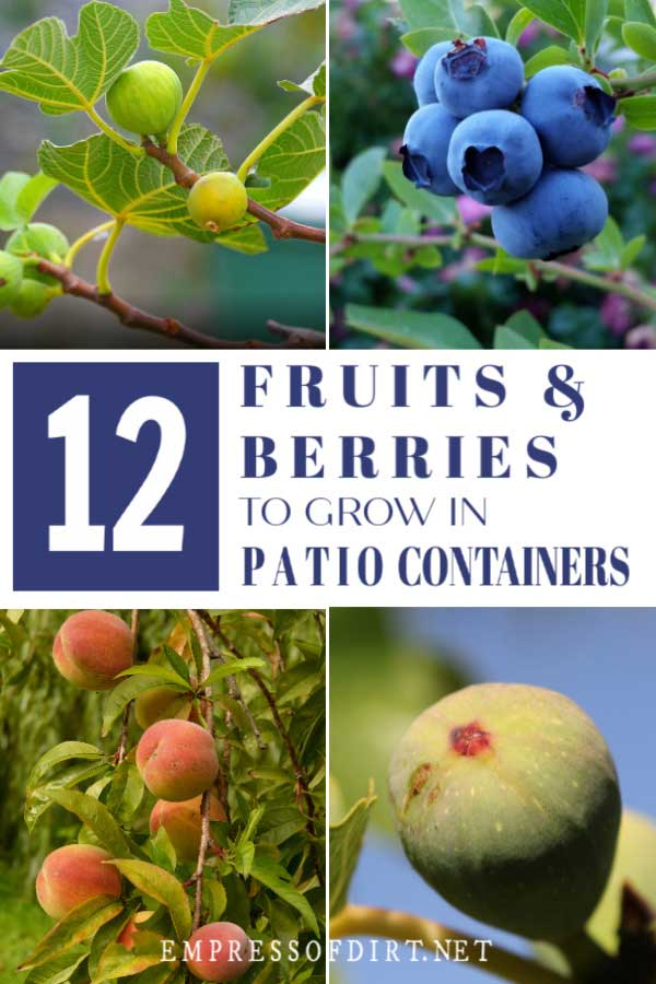 Examples of fruits that you can grow in containers on a patio.
