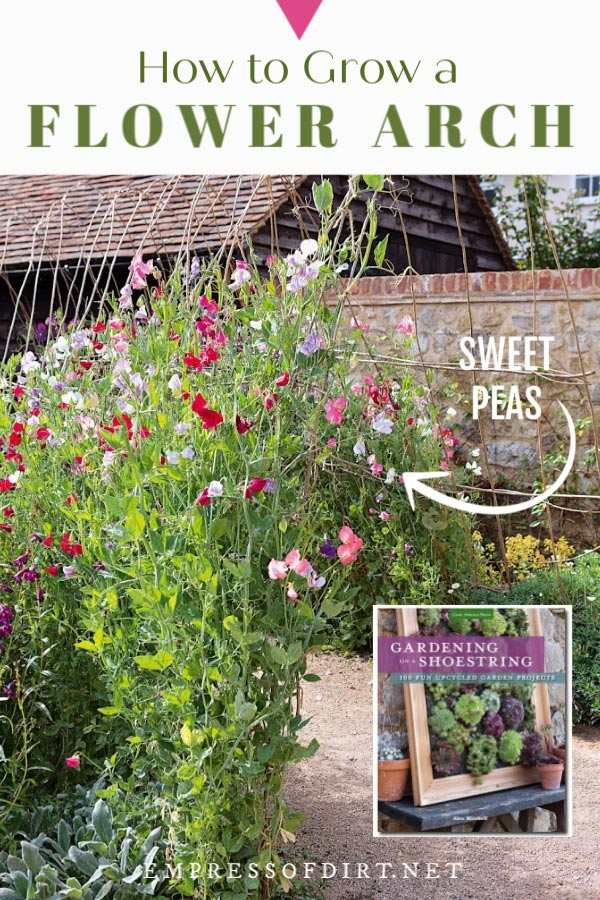 Sweet pea flowering garden arch.
