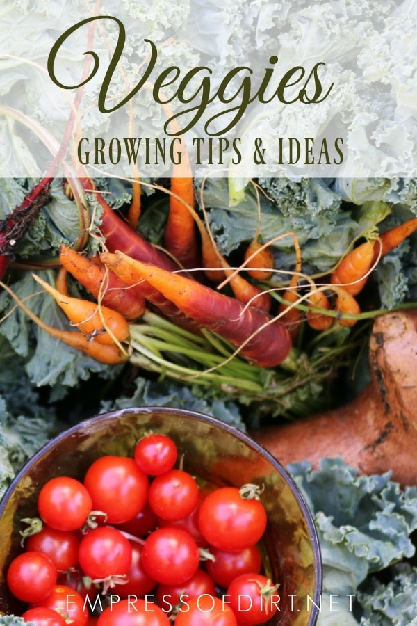 Grow a bountiful veggie garden with these fresh tips.