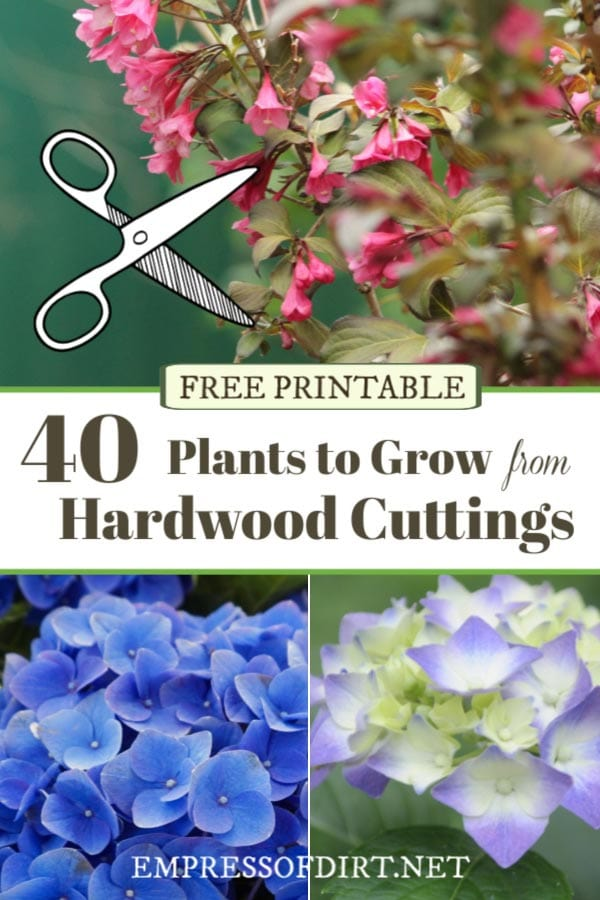 Examples of plants to use for rooting hardwood cuttings.