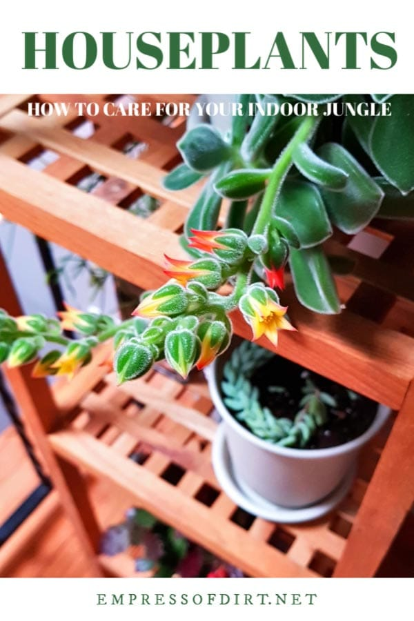 Tips for growing happy, healthy houseplants in your home.