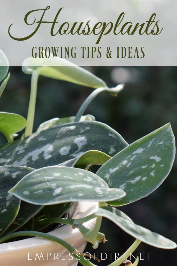 Tips and ideas for happy, healthy houseplants all year-round.