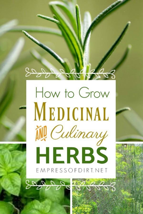 How to Grow Medicinal and Culinary Herbs