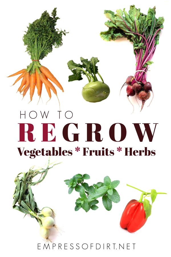 39 Vegetables, Fruits, and Herbs to Regrow from Scraps | Empress ...