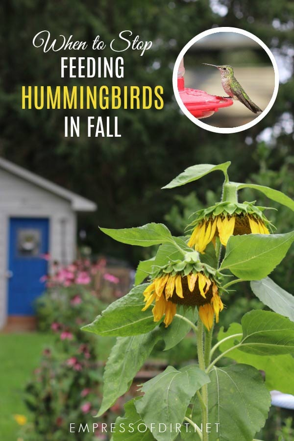 When to stop feeding hummingbirds in fall when they are migrating.