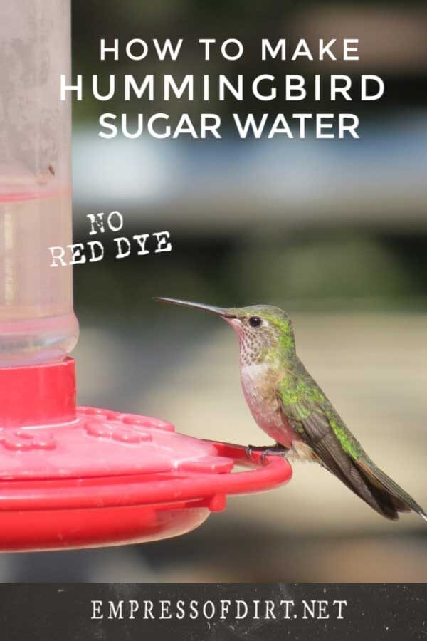 How to Make Sugar Water for Hummingbirds