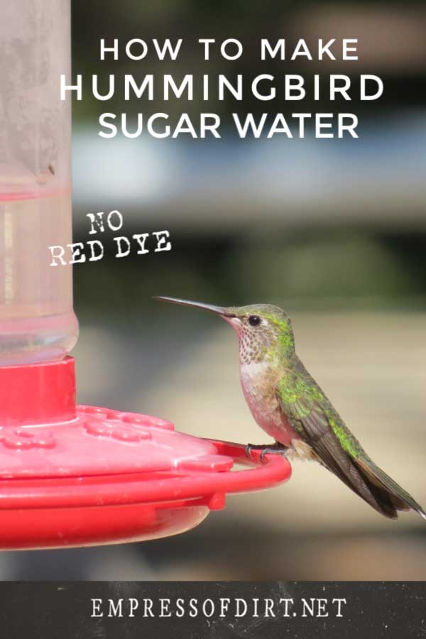 Hummingbird drinking at feeder.