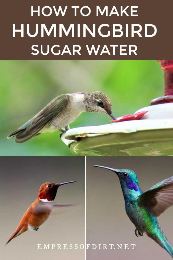 Hummingbird drinking at feeder.