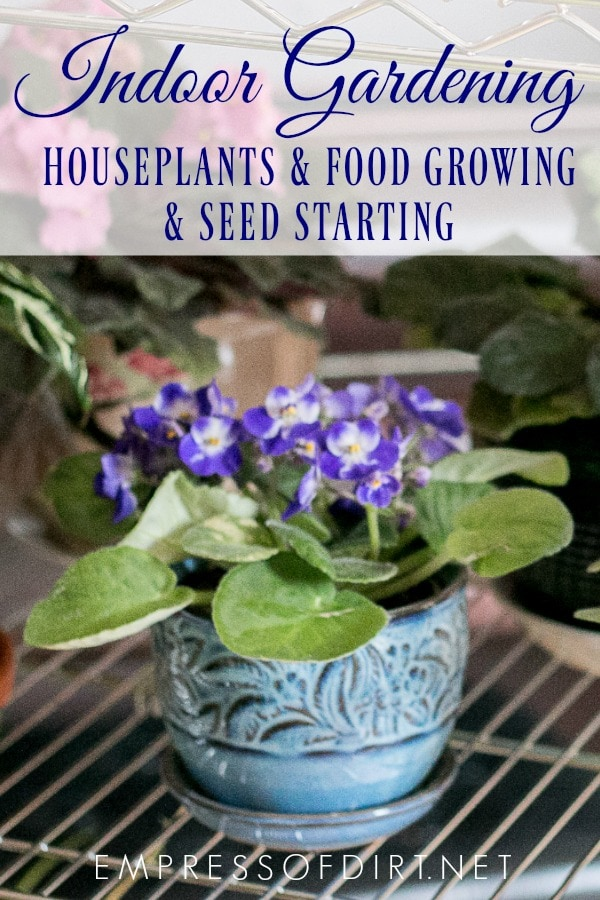 Tips for indoor gardening including seed starting, food growing, and houseplant care.