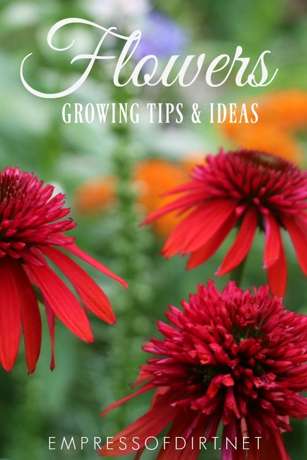 Tips for growing a garden full of flowers from a happy flower fanatic.