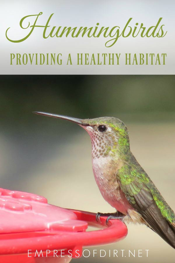 How to attract hummingbirds and provide healthy habitat and food so they will stay and flourish.