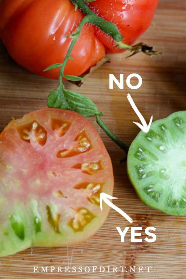Tomatoes sliced open to show immature and mature seeds inside.