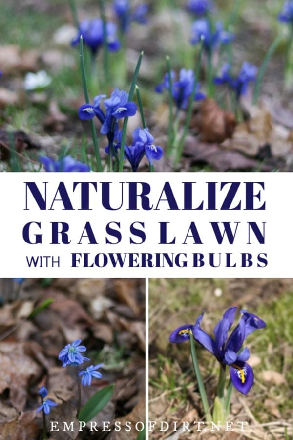How to Naturalize Your Grass Lawn with Flowering Bulbs