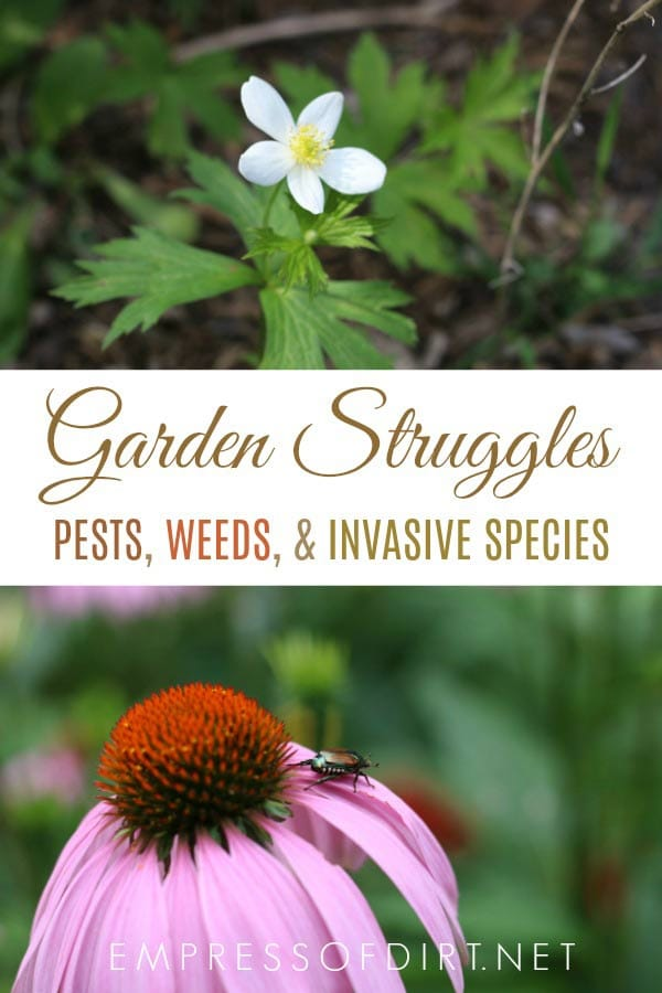 Dealing with garden pests, weeds, and invasive species as an organic gardener who wishes to do minimal harm.