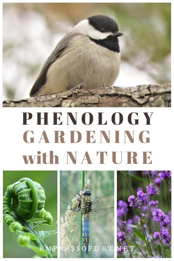 Garden naturally with phenology.