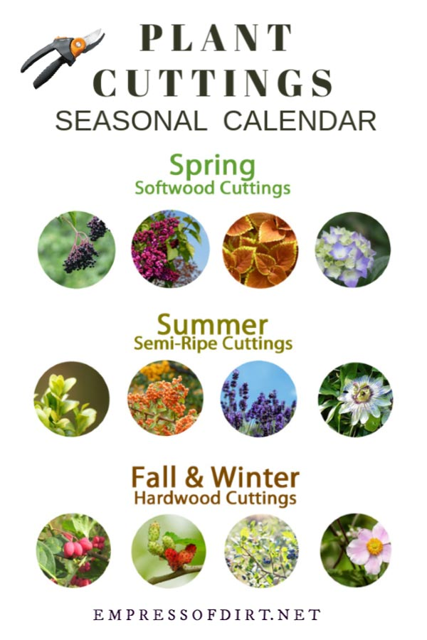 Seasonal Calendar: When to Take Plant Cuttings