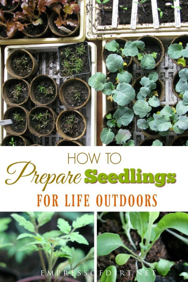 How to Prepare Indoor Seedlings and Greenhouse Plants for Transplanting Outdoors