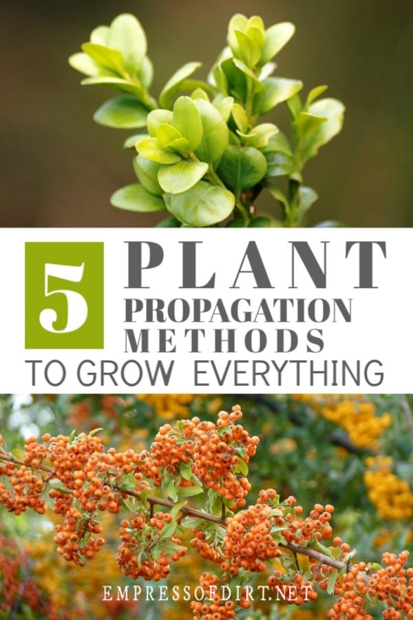 Basic propagation methods for beginner gardeners so you can grow your own plants.
