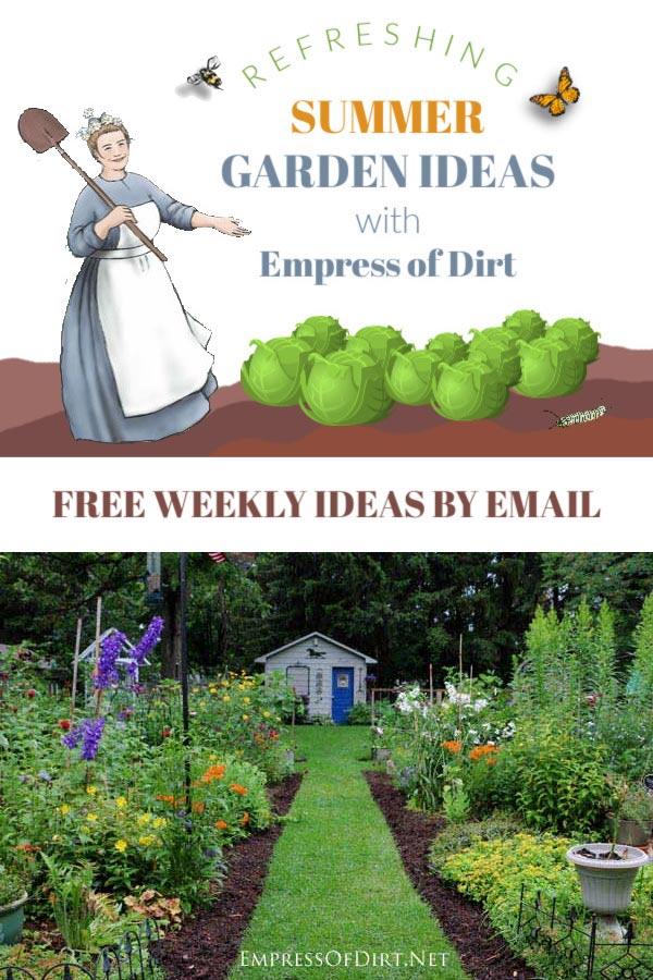 Get Your Refreshing Summer Garden Ideas Here