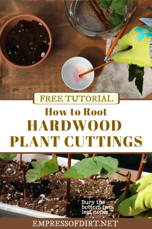 How to root dardwood cuttings.