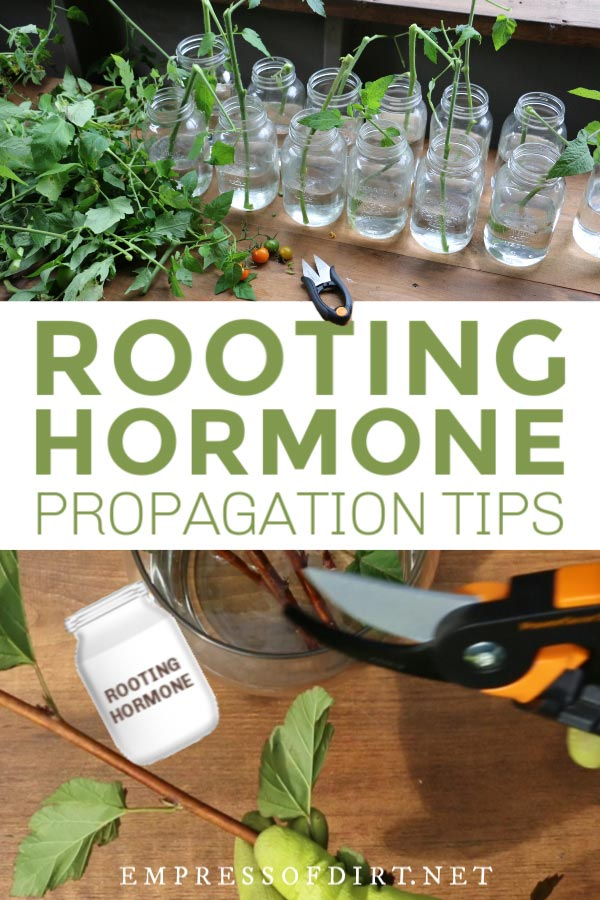 When to Use Rooting Hormone for Plant Propagation