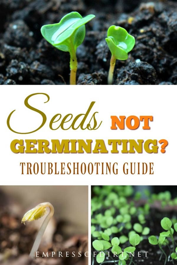 If your seeds are not germinating, this troubleshooting guide will help you determine why.
