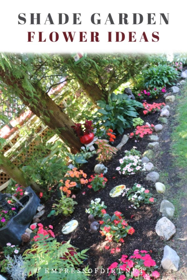 Colorful flowering plants in a shade garden.