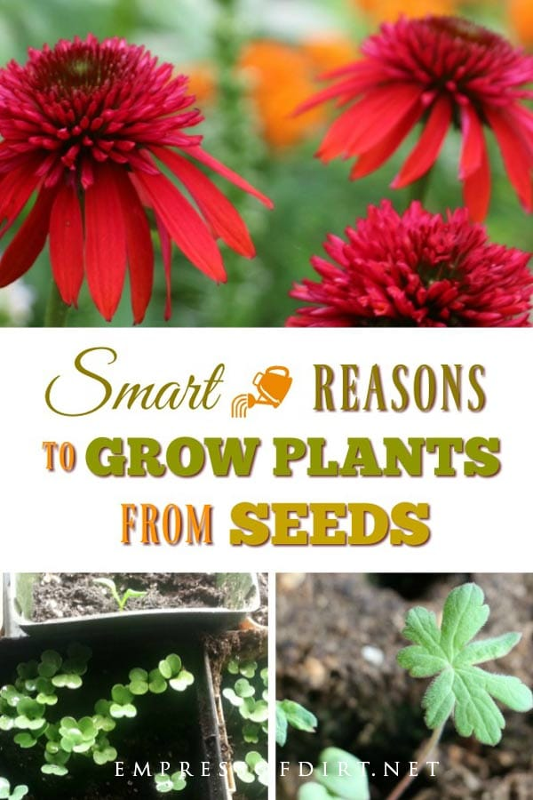 If you wonder why gardeners love to grow plants from seeds, this will convince you to give it a try.
