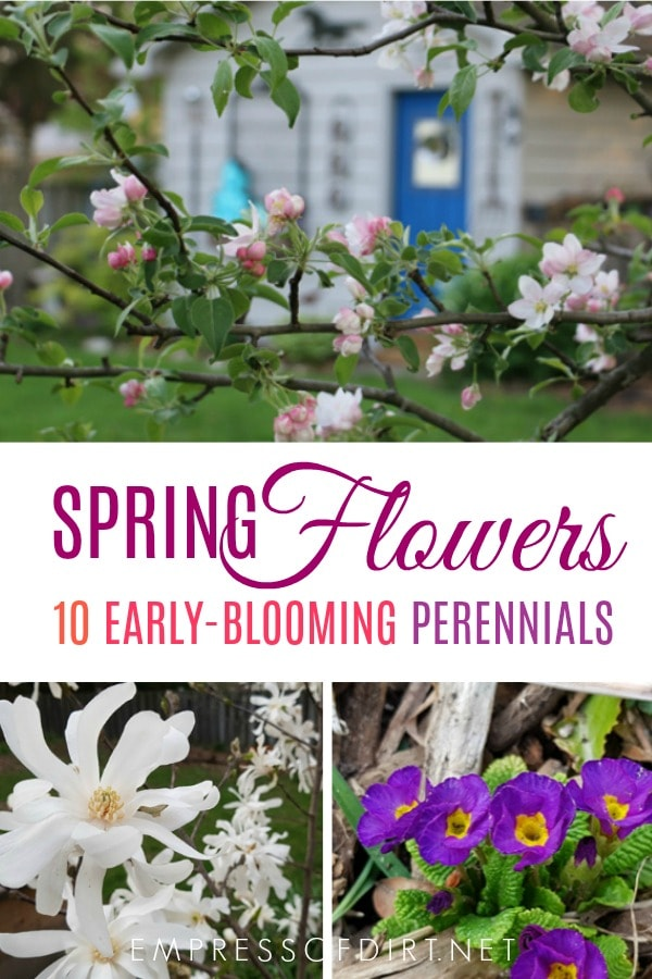 10 spring flowering perennials for early blooms in your garden.