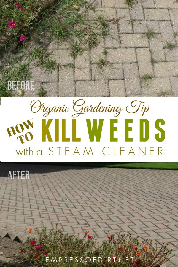 How to Remove Weeds with a Steam Cleaning Machine