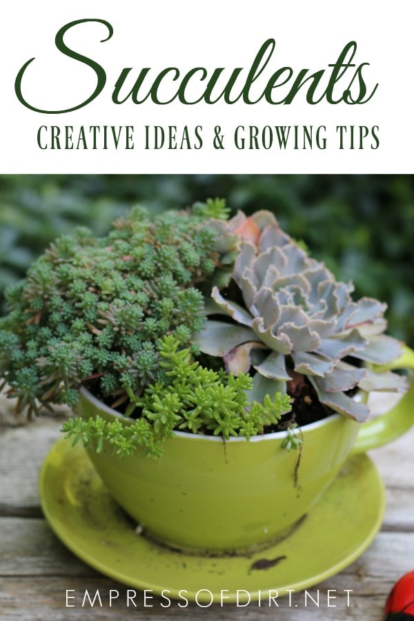 Creative ideas for growing succulents and growing tips.