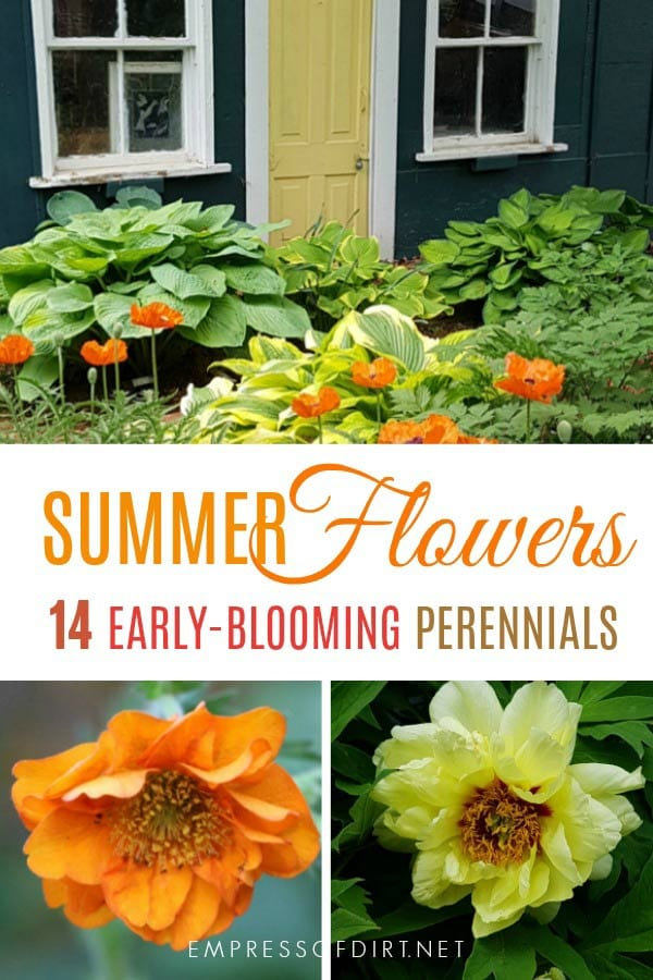 Flowering perennials that bloom in late spring and early summer.