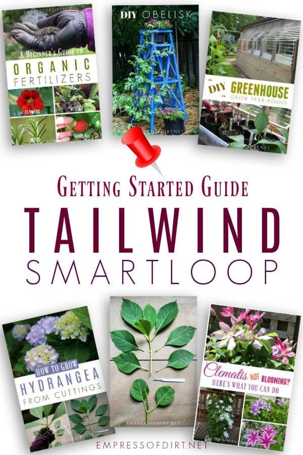 Tailwind SmartLoop Guide for Bloggers.