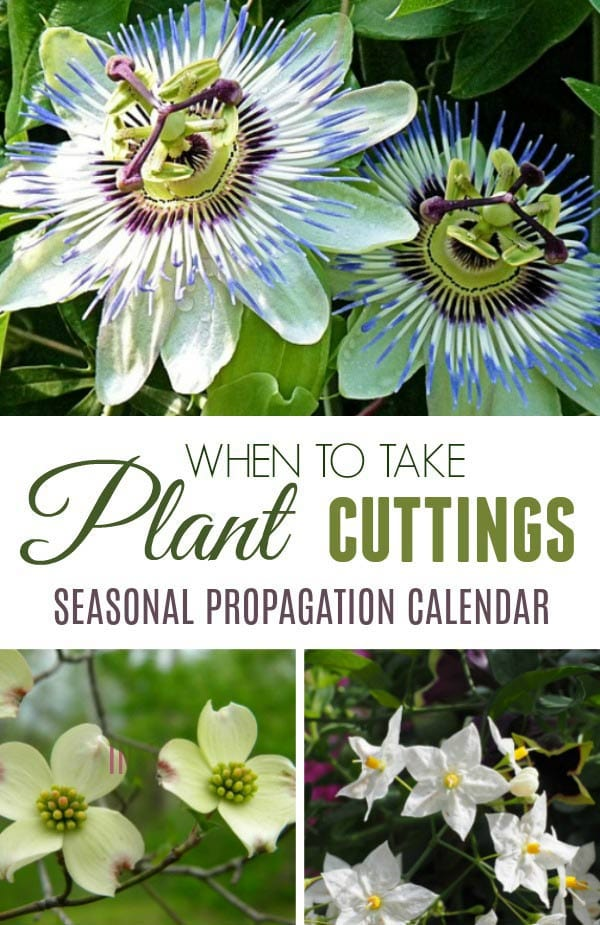 When to Take Plant Cuttings | Seasonal Propagation Calendar