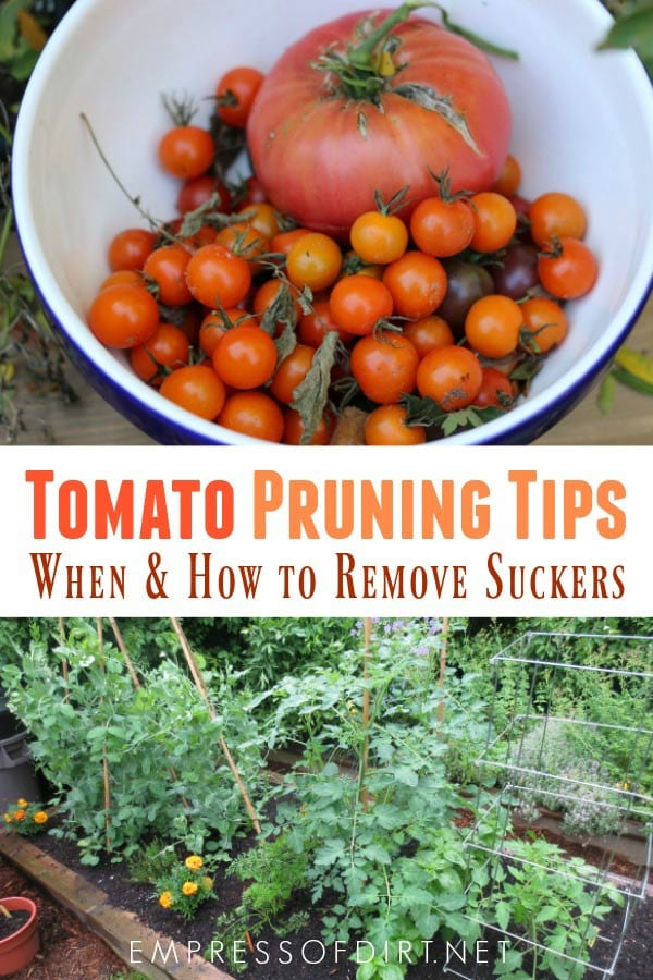 How and when to prune tomato plants and when to leave them alone.