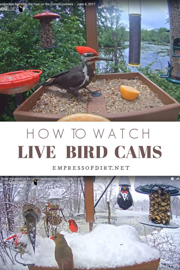 How to watch live bird cams