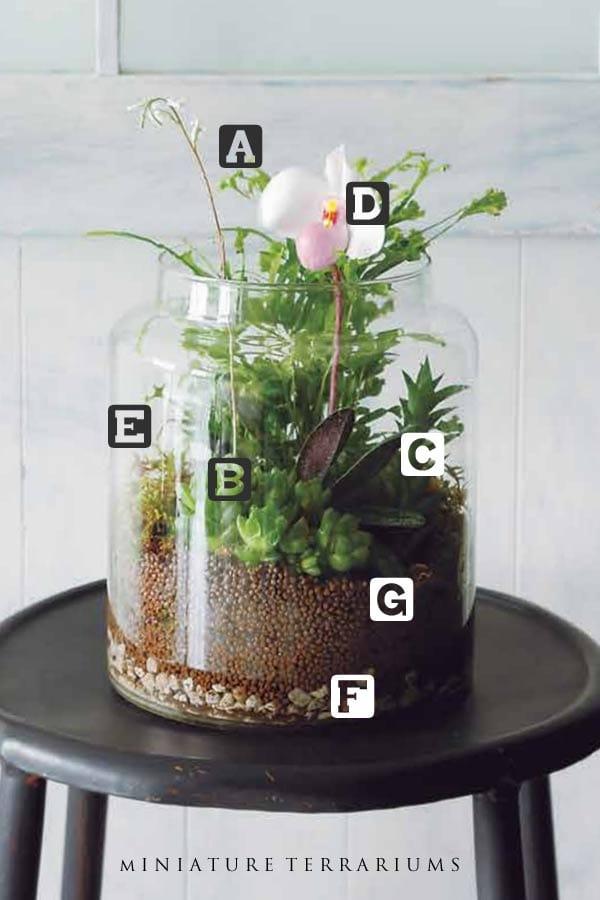 Diagram of plants in miniature terrarium.